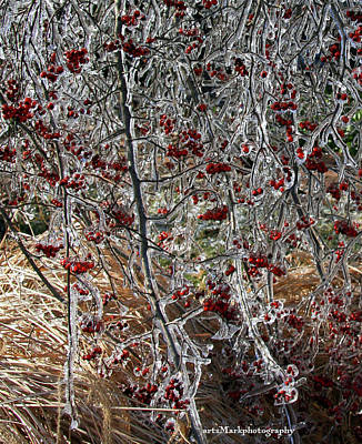 Photograph - iceBerries by Mark Alesse