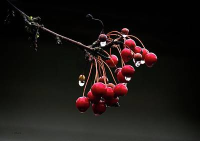 Photograph - Iced Crab Apples by Bill Linn