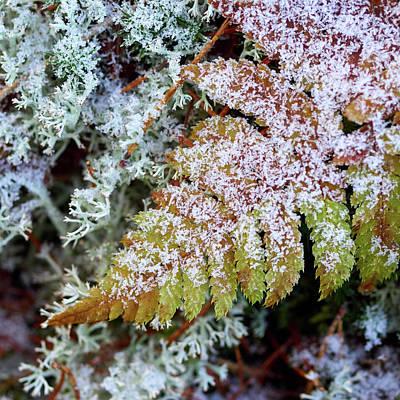 Photograph - Iced Fern by Jouko Lehto