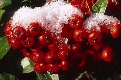 Iced Ruby Cluster - Tille Creek  Print by Soli Deo Gloria Wilderness And Wildlife Photography