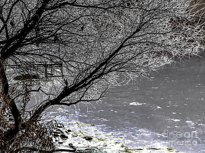 Photograph - Iced Tree by William Norton