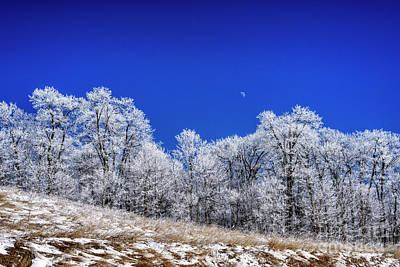 Photograph - Iced Trees And Moon by Thomas R Fletcher