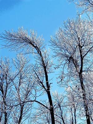 Photograph - Iced Trees by Craig Walters