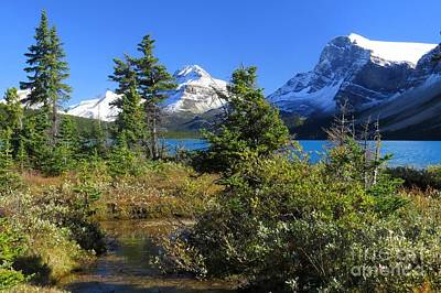 Photograph - Icefields Tranquility by Frank Townsley