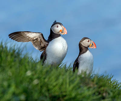 Puffin Wall Art - Photograph - Iceland A World Of Puffins by Betsy Knapp