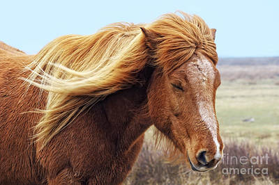 Iceland Horse In The Wind Art Print by Angela Doelling AD DESIGN Photo and PhotoArt