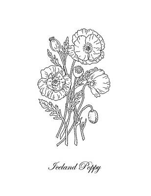 Florals Drawings - Iceland Poppies Botanical Drawing Black And White by Irina Sztukowski