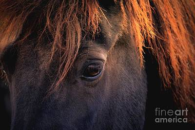 Photograph - Icelandi Horse by Mary-Lee Sanders