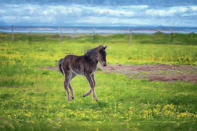 Photograph - Icelandic Foal by Tom Singleton