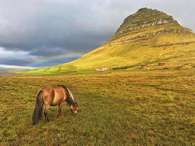 Photograph - Icelandic Horse And Mountain by Jack Nevitt
