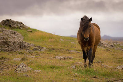 Photograph - Icelandic Horse by Chris McKenna