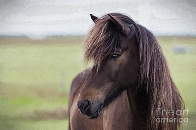 Photograph - Icelandic Horse by Patti Schulze