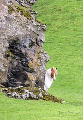Photograph - Icelandic Horse by Veronica Busch