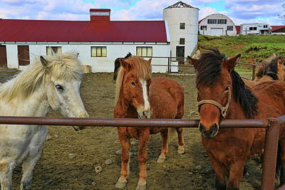 Photograph - Icelandic Horses # 3 by Allen Beatty