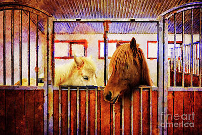 Photograph - Icelandic Horses Of Hester-stables 3 by Craig J Satterlee