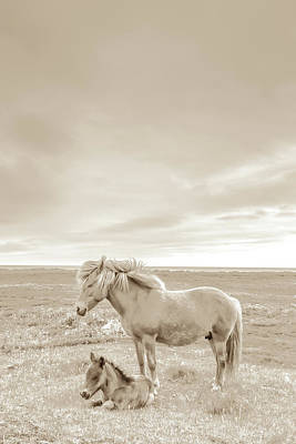 Photograph - Icelandic Mare And Foal #4 by Tom and Pat Cory
