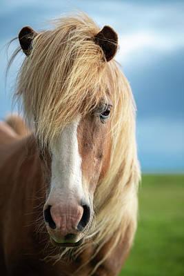 Photograph - Icelandic Portrait by Josh Eral