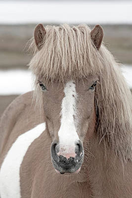 Long Mane Photograph - Icelandic Treasure by Betsy Knapp