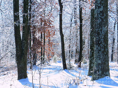 Photograph - Icey Forest 1 by Craig Walters