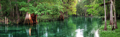 Cypress Swamp Photograph - Ichetucknee Springs At Dawn by Matt Tilghman