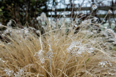 Photograph - Icicles On Ornamental Grass, No. 2 by Belinda Greb