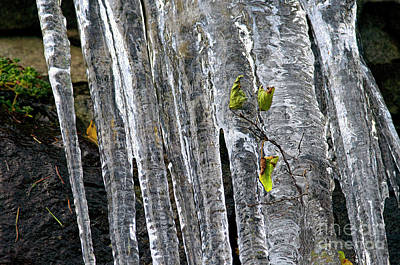 Art Print featuring the photograph Icicles by Sharon Talson