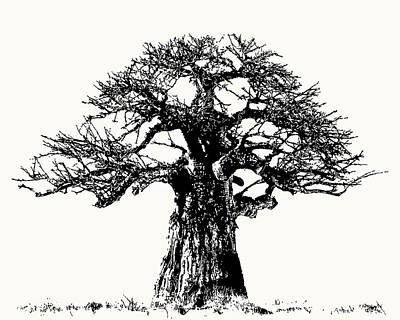 Photograph - Iconic Baobab Tree In Black And White by Scotch Macaskill