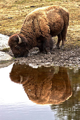 Photograph - Iconic Yellowstone Reflections by Adam Jewell