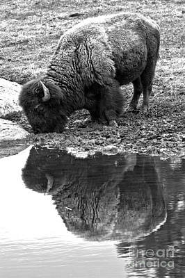 Photograph - Iconic Yellowstone Reflections Black And White by Adam Jewell