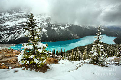 Photograph - Icy Blues And Snow At Peyto Lake by Adam Jewell