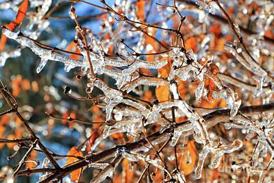 Photograph - Icy Branches by Elizabeth Dow