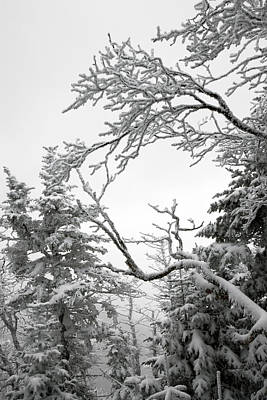 Icy Branches In The Adirondack Mountains Of New York Art Print by Brendan Reals