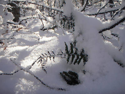 Photograph - Icy Fern by Nicole Angell