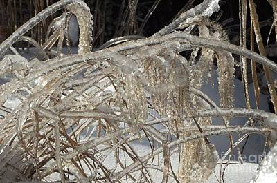 Photograph - Icy Grass by David and Lynn Keller