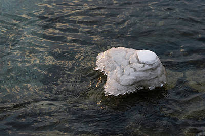 Photograph - Icy Island - Drifting Solo On Silky Grays by Georgia Mizuleva