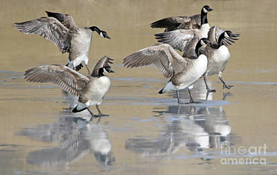 Photograph - Icy Landing by Elizabeth Winter