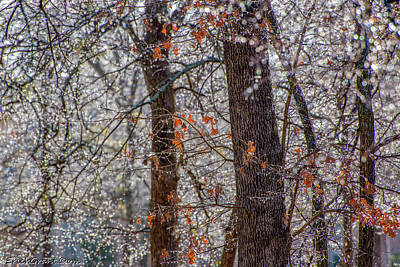 Photograph - Icy Limbs by Erich Grant