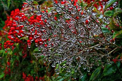 Photograph - Icy Nandinas 2 by Kathryn Meyer