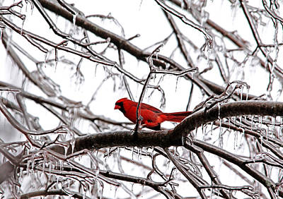 Photograph - Icy Perch by Debbie Oppermann