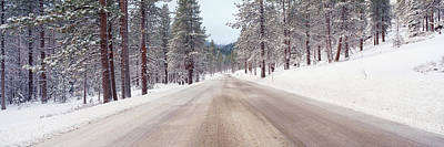 Icy Road And Snowy Forest, California Print by Panoramic Images