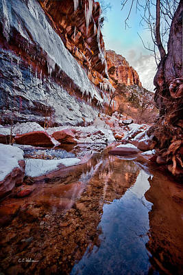 Photograph - Icy Stillness by Christopher Holmes
