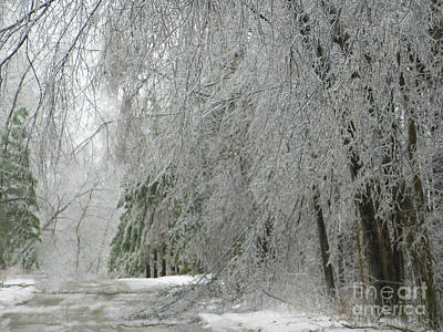 Icy Street Trees Art Print