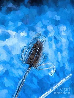 Photograph - Icy Thistle Plant by Les Palenik