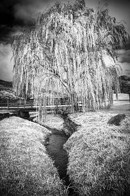 Icy Tree In The Meadow Black And White Art Print