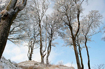 Photograph - Icy Trees by Helen Northcott
