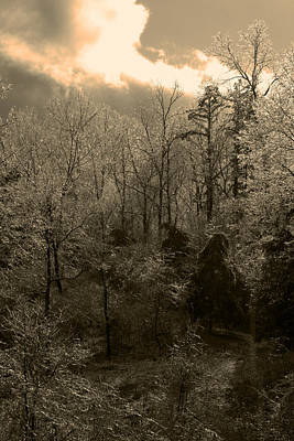 Photograph - Icy Trees In Sepia by Scott Sanders