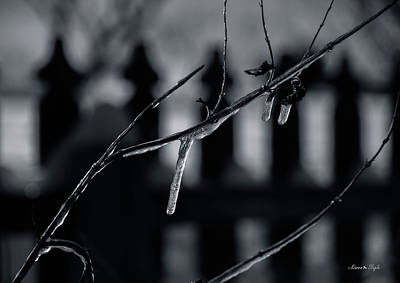 Photograph - Icy Twig by Karen Slagle