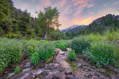 Photograph - Idaho Bluebell Habitat by Leland D Howard