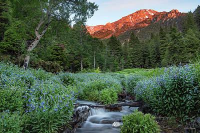 Photograph - Idaho Bluebell by Leland D Howard