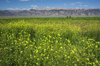 Photograph - Idaho Field Of Wildflowers by Aaron Spong